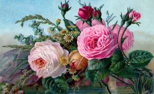 English High Tea Roses